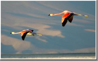 Flamingos over Salar de Pedernales, Cordillera de Domeyko, Atacama Desert, Chile