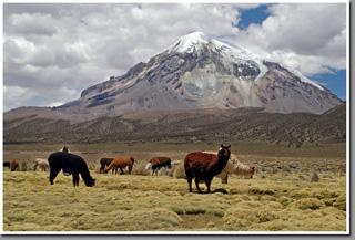 Nevado Sajama volcano (6542m), Sajama National Park, Altiplano, Bolivia