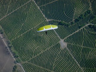 Lemon Air - Carlos Curi flying his paraglider over lemon tree plantations in Tucuman, Argentina during Argentinian National Loma Bola Paragliding Championship